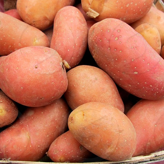 Fingerling potatoes photo