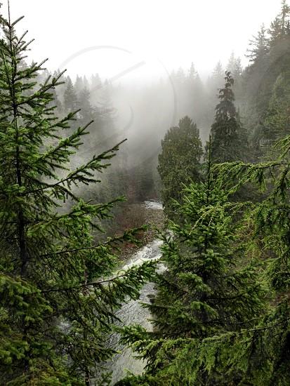 River creek forest wood fog photo