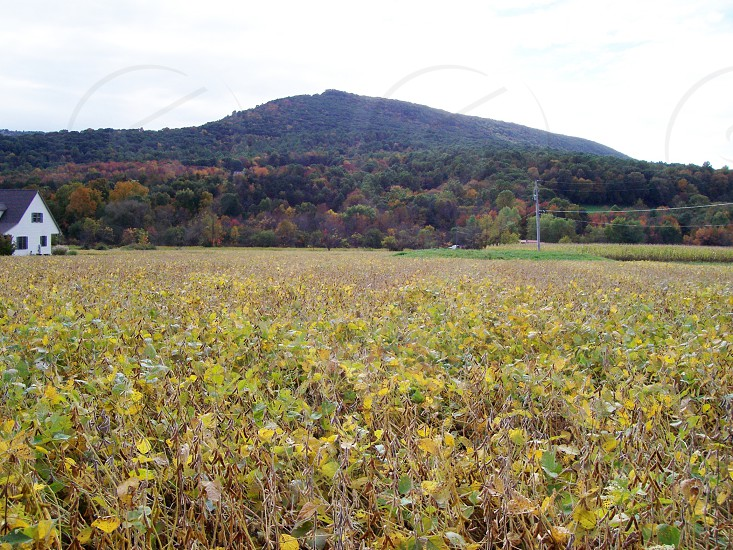 PA in Fall photo