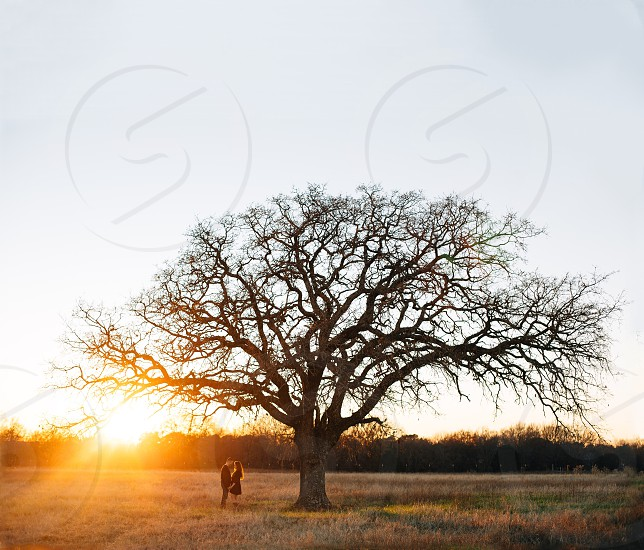 couple standing close face to face under tree during sunset photo