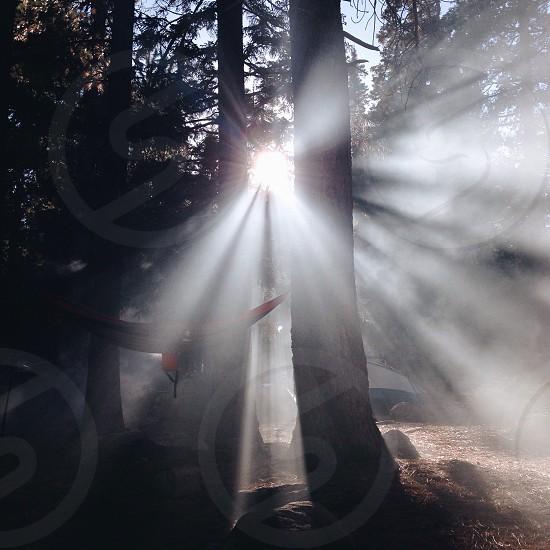 tall tree silhouette photo