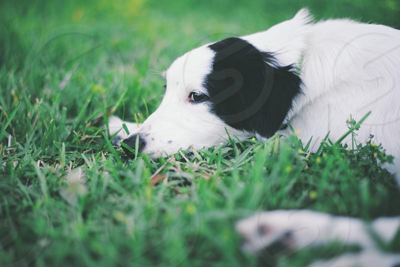 black white mixed coat dog photo