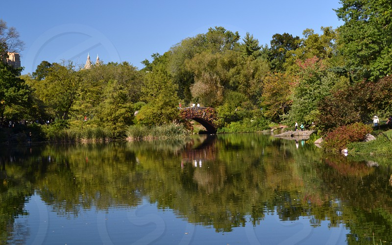 Reflection water bridge Central Park pond green blue photo
