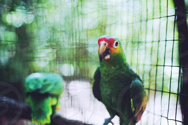 green and red bird photograph photo