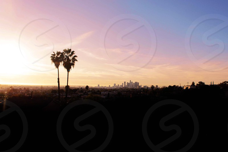 Los Angeles city halved pink summer palm trees  photo