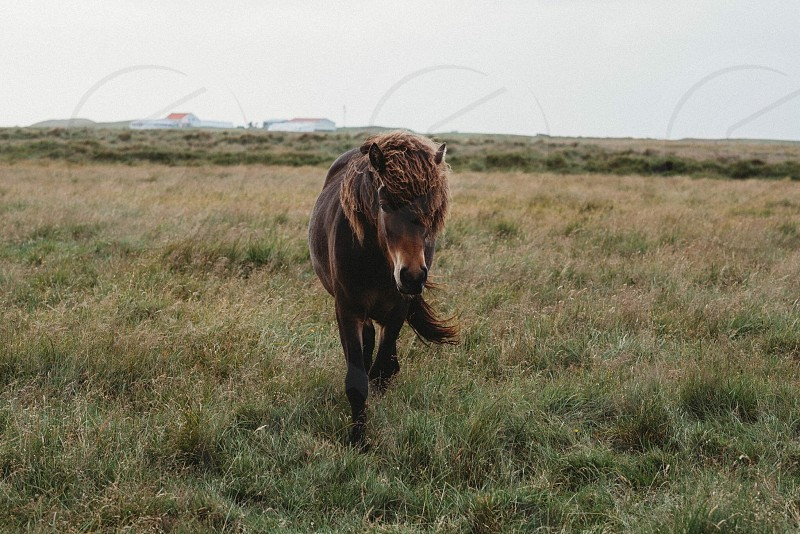 Horse in Iceland!  photo