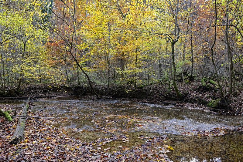 hiking path through Maisinger Schlucht in Bavaria (Germany). small river flowing. Beech forest around. photo