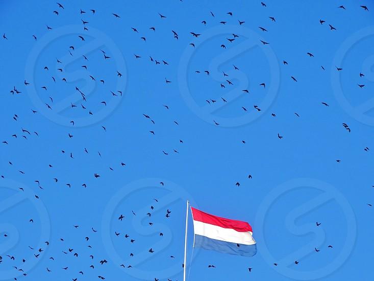 Flagdutch flagdutchholland.the netherlandsflagpolebirds flyingbirdsflock of birdsskyblueblue skymastflying high photo