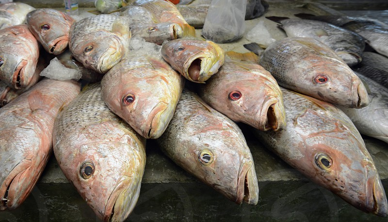 fish at the day Market in the city of Phuket on the Phuket Island in the south of Thailand in Southeastasia.