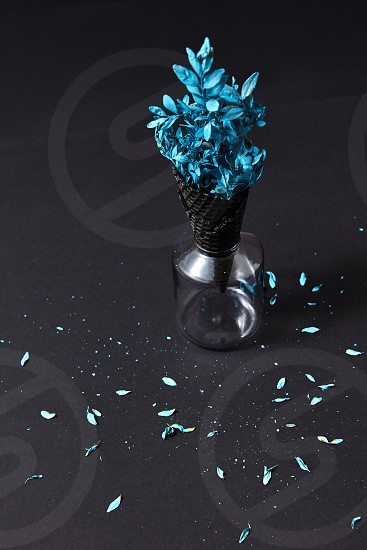 Blue painting branch with little blue leaf in a waffle black cone in a glass and petals on a black paper background place for text. photo
