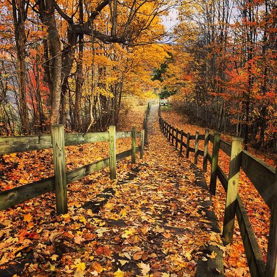 Hues of Autumn Fall Colors photo