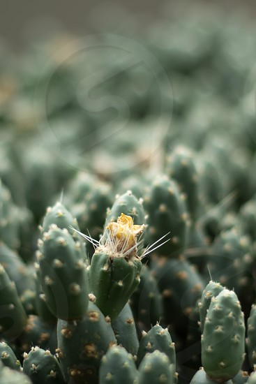 Closeup of a cactus in flower photo