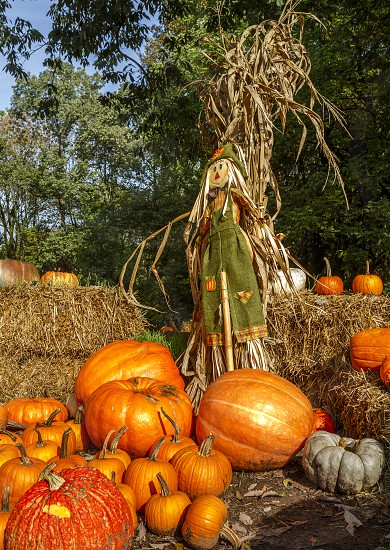 Autumn Pumpkins at an Outdoor Park photo
