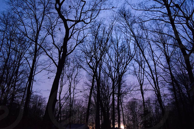 Trees; colours; backyard; purple; blue; light  photo