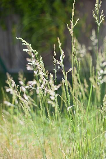 green and white grasses photo