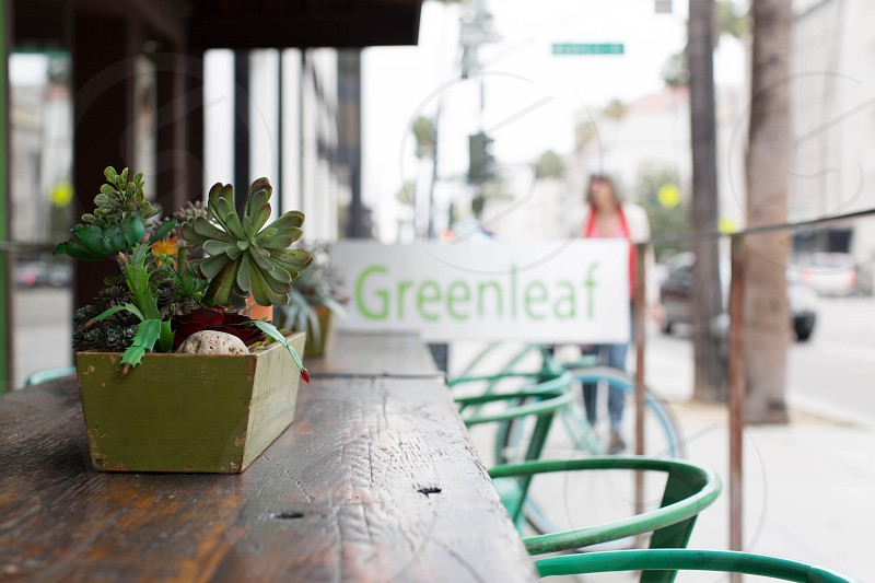 photography of green petaled plant in green wooden vase on top of table near greenleaf store during daytime photo