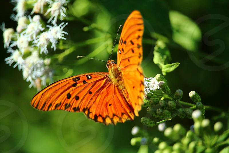spring orange plants butterfly pollination wings insect nature photo