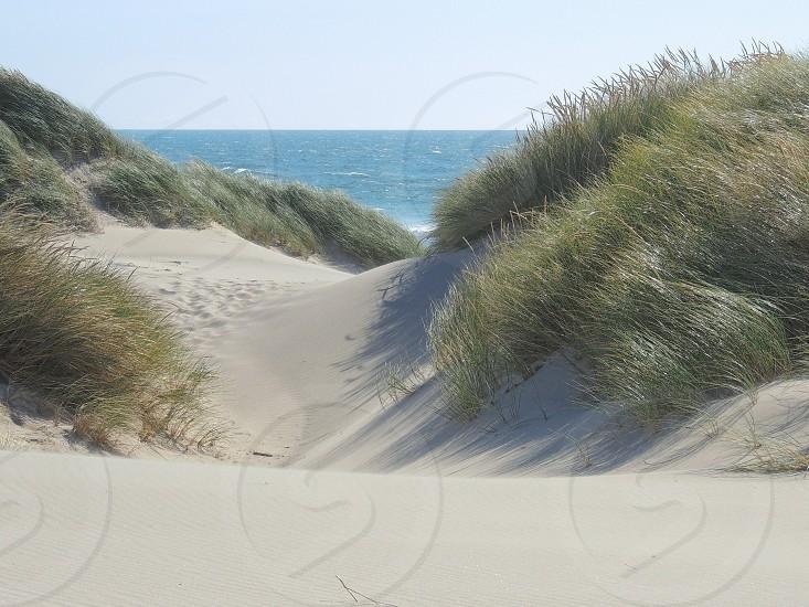 Pacific Dune photo