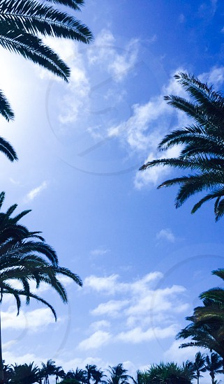 Spring palmtrees holiday blue photo