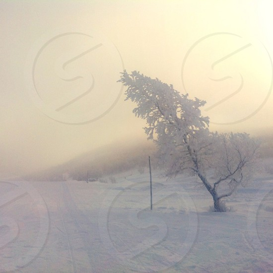 white tree on snowy place photo