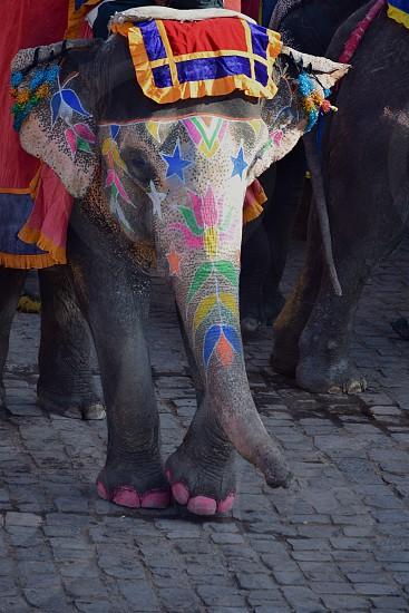 Pink toed elephant photo