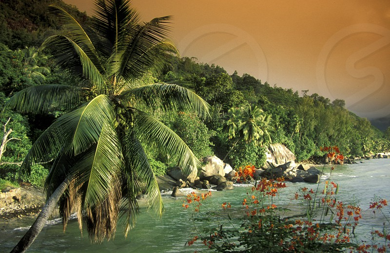 a Beach on the coast if the Island Mahe of the seychelles islands in the indian ocean photo