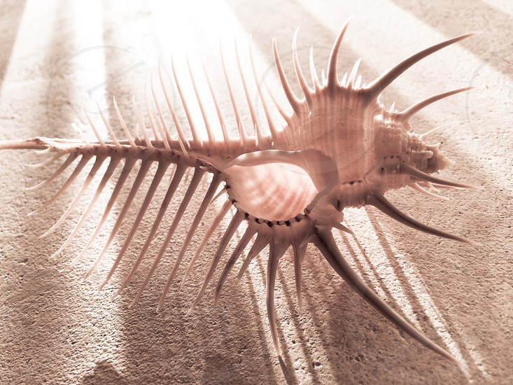 white spiky shell on sand photo