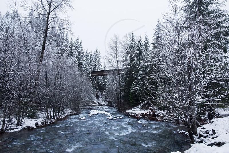 stream in between snow covered trees below bridge and gloomy sky during daytime photo