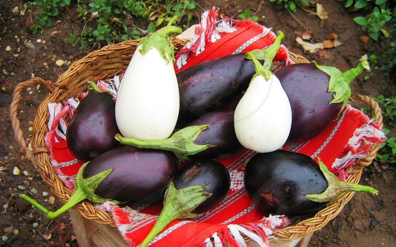 deep purple and white oblong eggplants on red and white textile photo