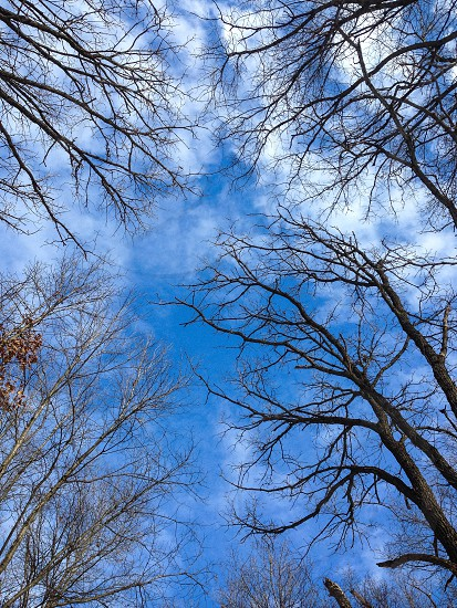 leafless trees under white and blue skies photo