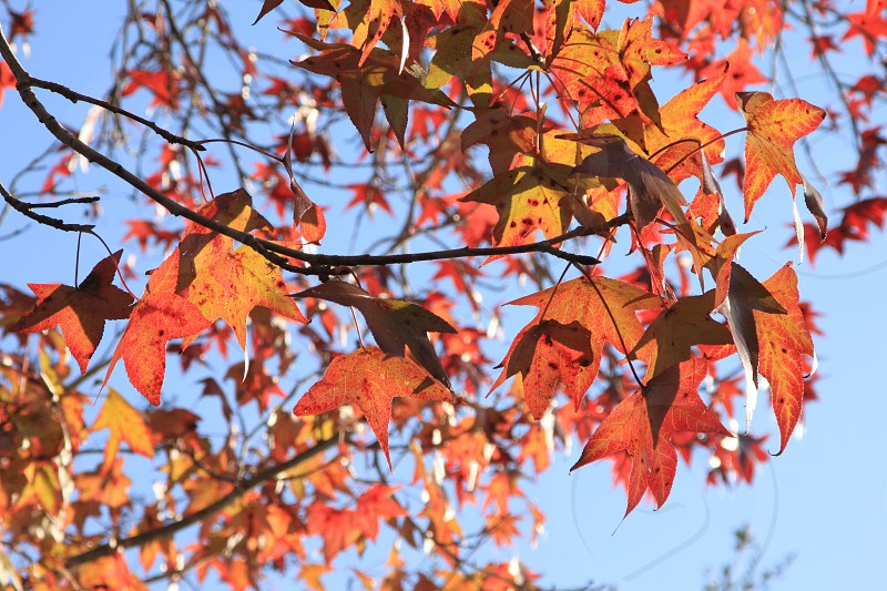 Fall foliage leaves sky nature abstract warm reds  photo