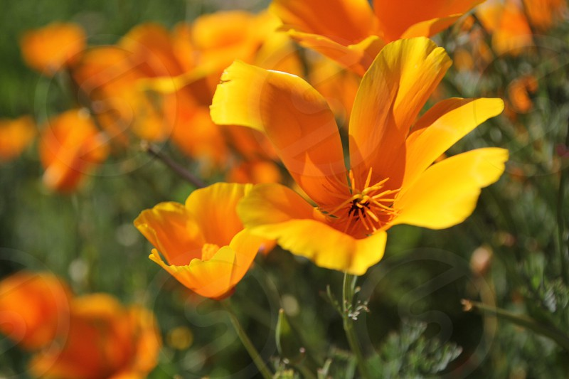 yellow and orange petalled flower photo