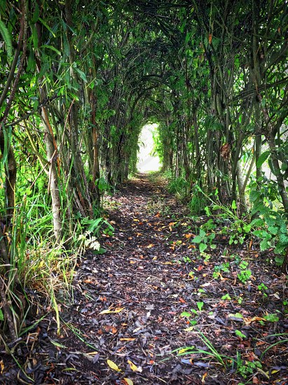 grey and black dirt pathway and green plants photo