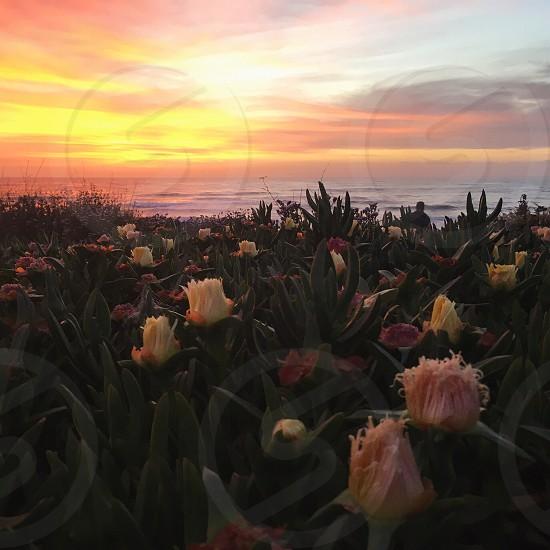 Sunset beach beach sunset cliff nature flowers wildflowers photo
