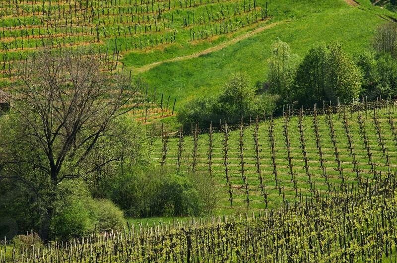 Cartize DOCG - Veneto Italy photo