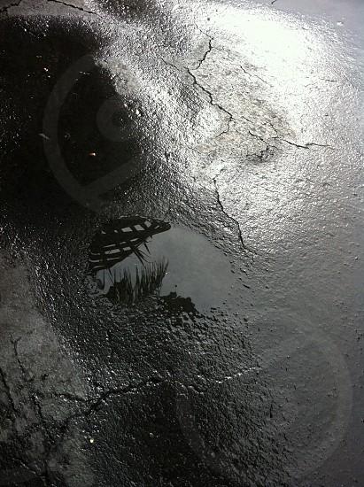 Reflection tropical blacktop black & white puddle. photo