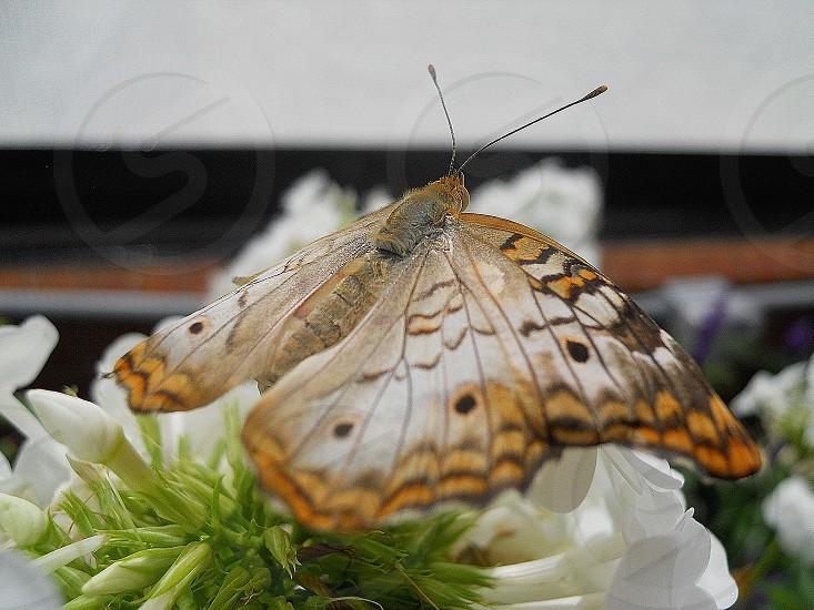 Butterfly on Flower Macro photo