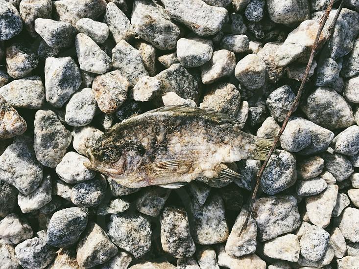 Fish dead litter trash gross weird dead fish biodegradable decayed photo
