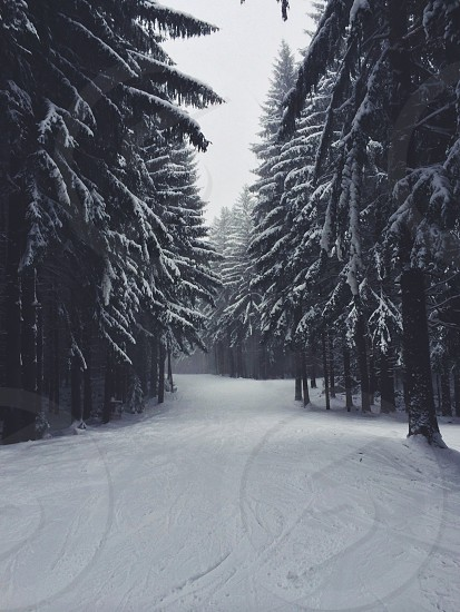 Snow. USA. Ellicottville. New York. Tress. VSCOcam. photo