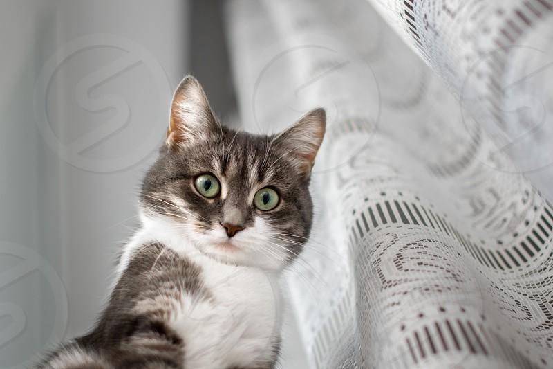 brown tabby cat beside white mesh curtain photo