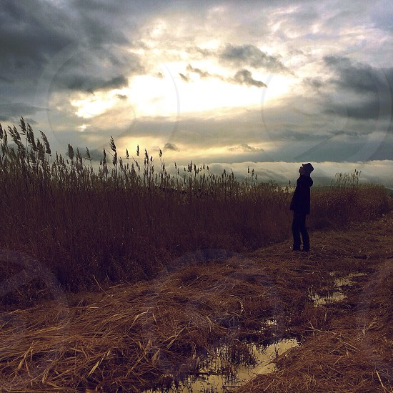 man standing in field next to tall wheat with face raised towards break in clouds photo
