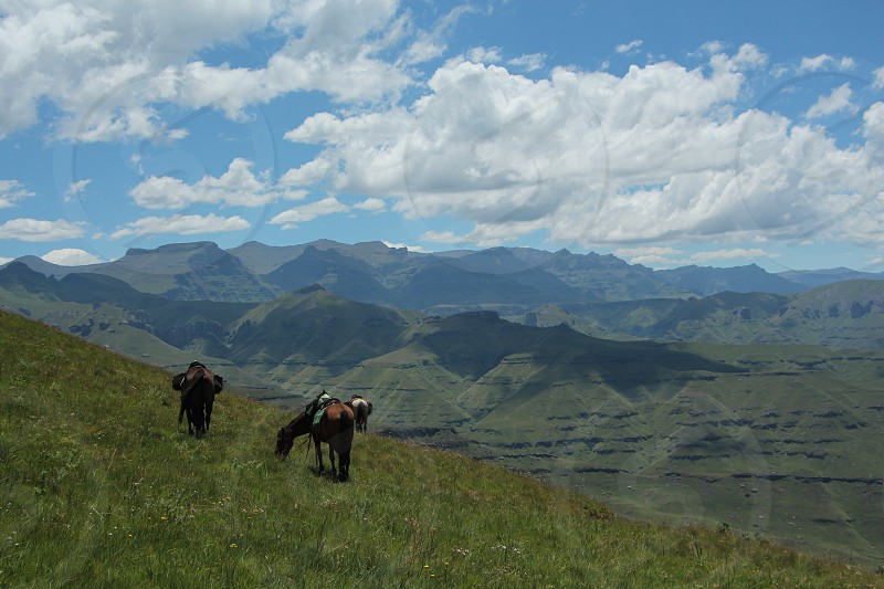 Beautiful scenery. Horses with the impressive Drakensberg mountains in the back. South Africa. photo
