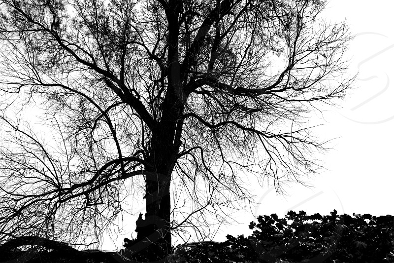 Silhouette of bare tree - black and white photo