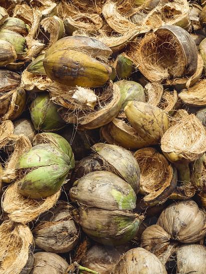 Cocunut shells. photo