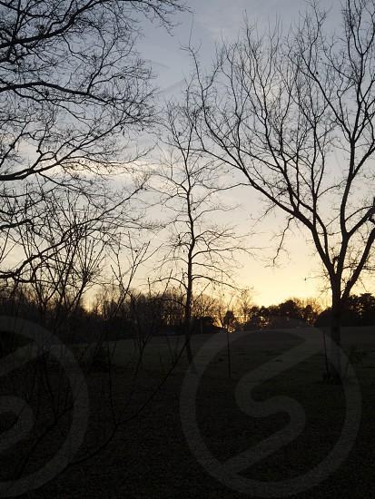 bare trees photo
