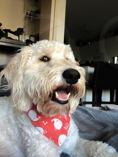 Happy dog photo