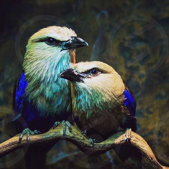 A pair of birds from the Dallas World Aquarium.  Edited with Litely.  Filter: Argyle Faded.  photo