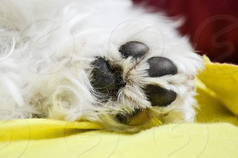 A dog's paw rests photo