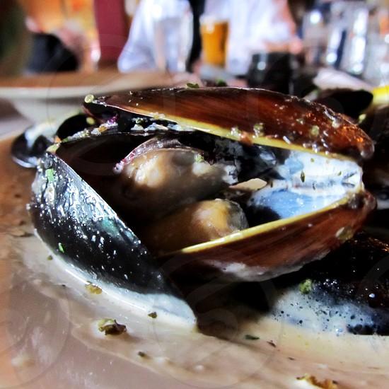 Mussels in cream sauce photo