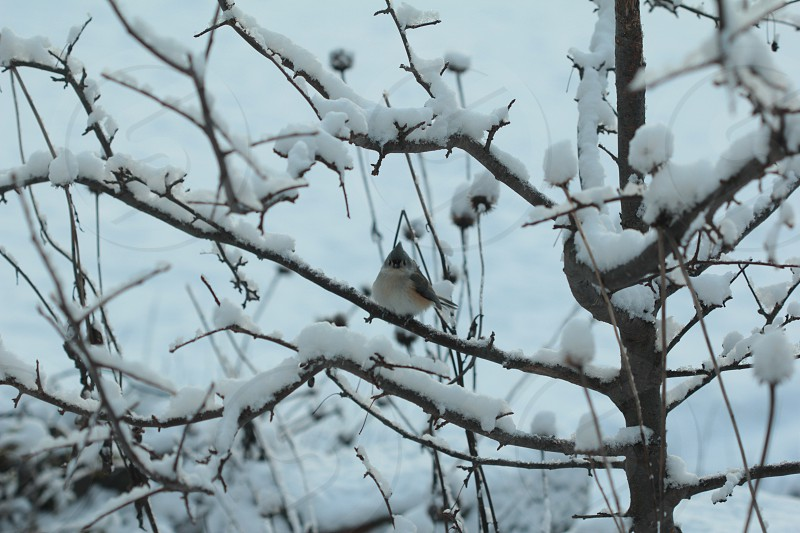 frozen winter ice cold birds nature titmouse  photo